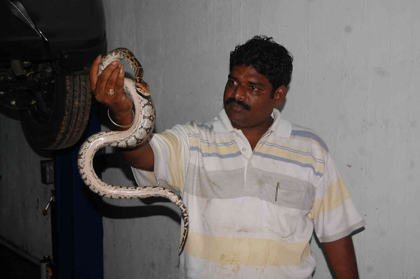 MOST SNAKES RESCUE