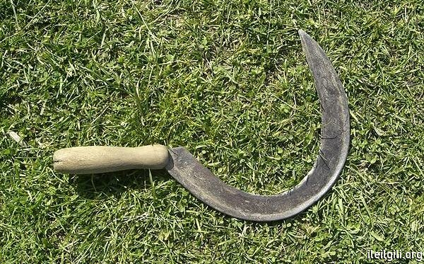 FASTEST TO MADE TEETH ON GRASS HOOK